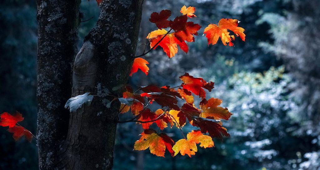 Is separation seasonal?